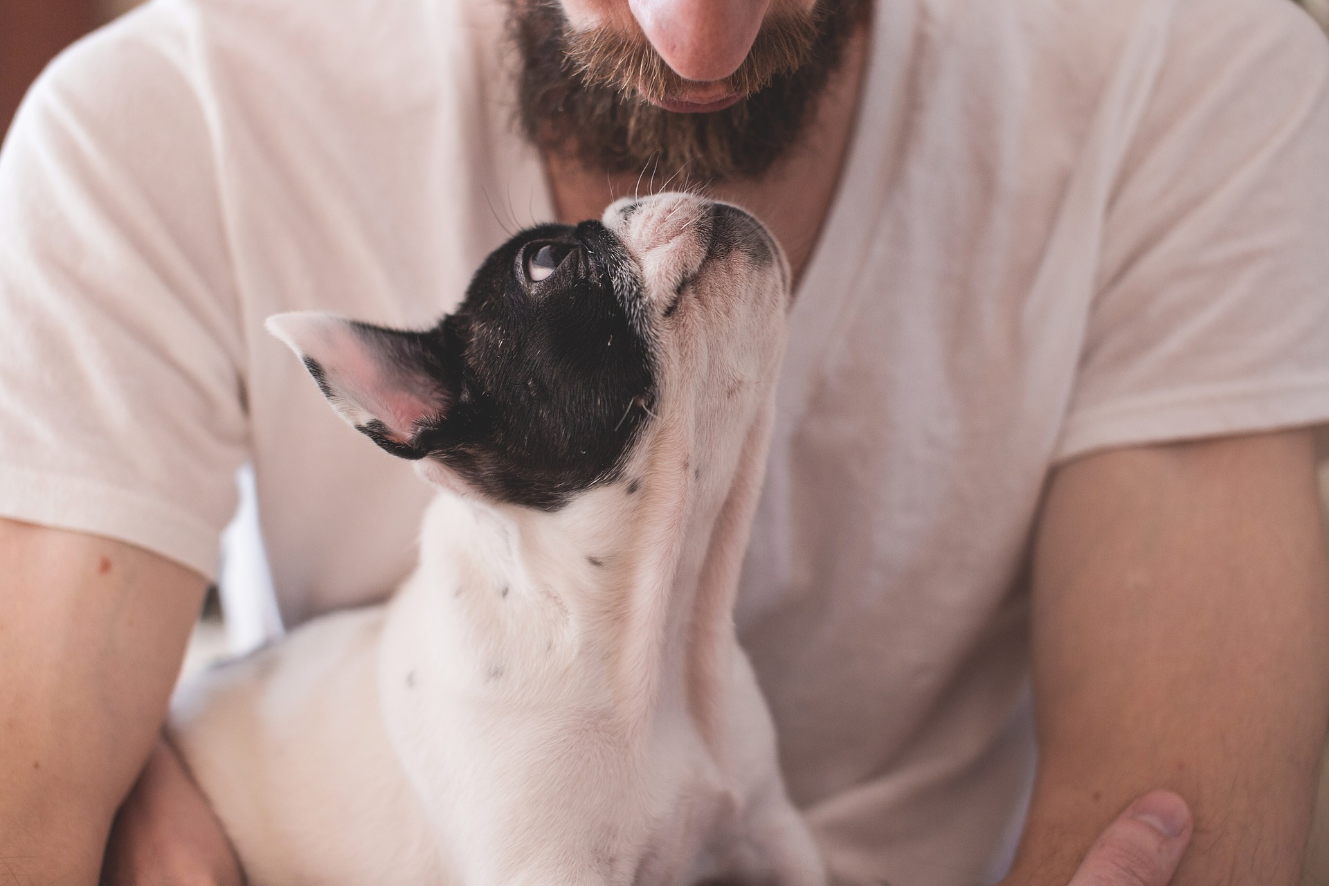 men and pets